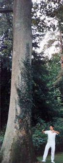 """Standing like a tree"""