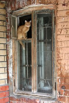.cat in the window