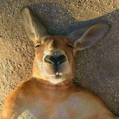 Kangaroo selfie?