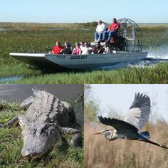 On the Airboat Swamp Safari, you'll discover territory that remains unaltered by man in the wilderness of the Central Florida Everglades. Visit Florida, Florida Travel, Man In The Wilderness, Voyage Usa, Airboat Rides, Naples Florida, Central Florida, South Florida, Disney World Florida