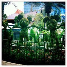 Magical Memories to make at the Resorts