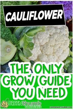 cauliflower is one of the vegetables that are grown during the cooler seasons You can easily grow cauliflower from seed in your vegetable garden The neat thing is you can. Vegetable Garden For Beginners, Home Vegetable Garden, Gardening For Beginners, Gardening Tips, Bucket Gardening, Greenhouse Gardening, Types Of Vegetables, Container Gardening Vegetables, Growing Vegetables