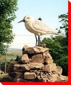 Semipalmated Sandpiper - Dorchester, New Brunswick Atlantic Canada, Roadside Attractions, Prince Edward Island, New Brunswick, The Province, Canada Travel, Roots, Birds, History