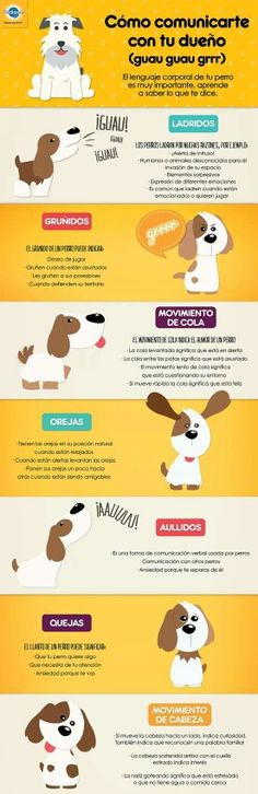 Infografia para entender a tu perro - Baby Dogs, Pet Dogs, Dog Cat, Doggies, I Love Dogs, Puppy Love, Animals And Pets, Cute Animals, Pet Supply Stores