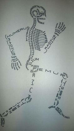 Skeleton drawing with all the names of the bones