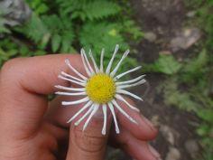 cool daisy shot