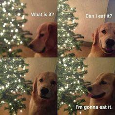 funny-dogs-446.jpg 600×600 pixels