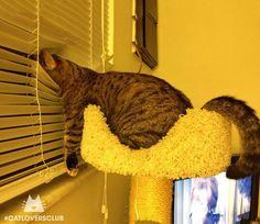 Funny cat sleeping position.