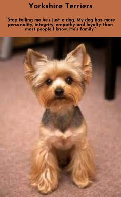 Discover more about Yorkshire Terriers Click the link for more info...