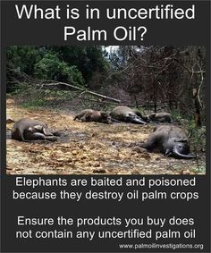 Don't buy products with palm oil!!! It's in a lot of things. Research it. This industry kills primates/monkeys as well.