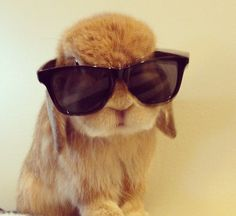Sunglasses are helpful should your Easter be sunny and hinder your site.