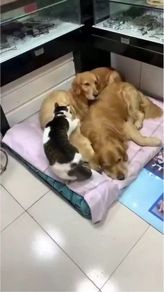 Baby Animals Pictures, Cute Animal Photos, Cute Animal Videos, Animals And Pets, Funny Animal Jokes, Cute Funny Animals, Cute Cats, Cute Dogs And Puppies, Doggies