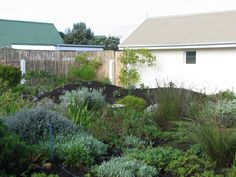 Fynbos Gardens Hermanus Landscape Maintenance, Water Wise, Terrace Garden, Farm Gardens, Irrigation, Fountain, Garden Ideas, Plants, Landscaping