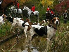 Oh how I love hunting. Horses, hounds and humans all interacting.