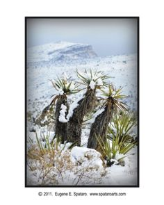 Yuccas in the snow - Near Red Rock Canyon - Las Vegas, Nevada
