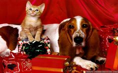 Don`t forget the animals at Christmas
