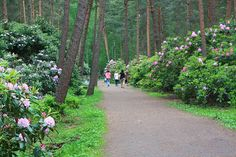 The Rhododendron Park in Helsinki, Finland.