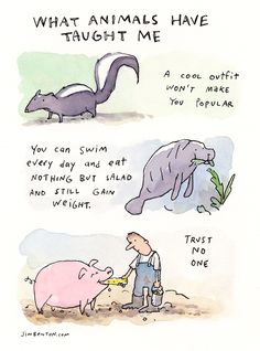 What animals have taught me