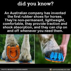 An Australian company has invented the first rubber shoes for horses. They're non-permanent, lightweight, comfortable, they provide traction and shock absorption, and they can clip on and off whenever you need them. Source<<< omg such a good idea Amazing Animals, Horse Information, Horse Care Tips, Horse Facts, Horse Gear, All About Horses, Horse Quotes, Horse Love, Show Horses