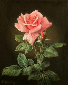 Wolfgang Grünberg - A Rose, oil on canvas, x 23 cm. # rose Drawings Things of beauty I like to see Rose Pictures, Flower Photos, Botanical Art, Botanical Illustration, Art Floral, Beautiful Roses, Beautiful Flowers, Rose Reference, Flower Wallpaper