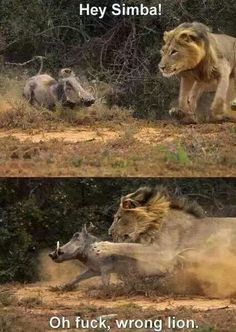 Hey Simba ... Oh F*Ck Wrong Lion,  Click the link to view today's funniest pictures!