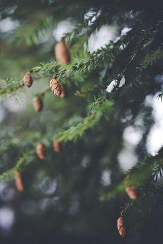 Скандинавский лес