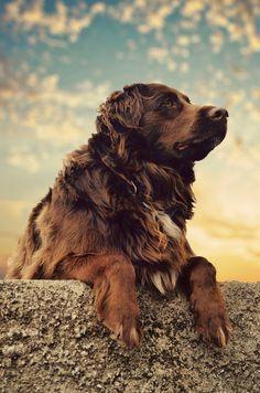 The Dog by ~marinkostrena on deviantART