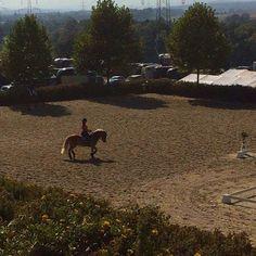 A for effort  #Hafl #morningtraining #notesttoday #horseshow #stillsummer #dressage #toohot #haflinger