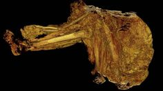 Cashel Man, a 4000 year old Bronze Age bog man was discovered in 2011 by a bog worker in Cashel bog in County Laois, Ireland. The image is a CT scan of his crushed skull (due to the weight of the bog)