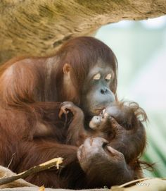 Mother and Child Love
