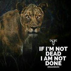 it in your asses bitches Lion Quotes, Wolf Quotes, True Quotes, Great Quotes, Bossy Quotes, Motivational Quotes Wallpaper, Wallpaper Quotes, Inspirational Quotes, Desire Quotes