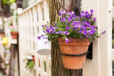 Some teasers of our 65 cover Secret Garden www.bumpkinuk.com