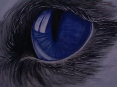 oeil de chat technique mixte aquarelle pastel