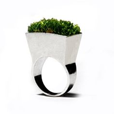 Growing ring by Icelandic designer, Hafsteinn Juliusson containing real moss.