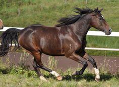 Wayward stallion no mate wants one