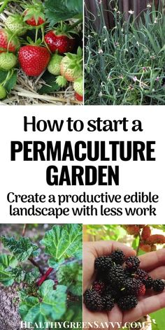 Heard of permaculture but not sure how to use it in your home garden? This quickstart guide to home permaculture will help you apply basic permaculture principles for a more productive garden with less work. #permaculture #ediblelandscaping #garden  #gardenhacks #permaculturegarden Permaculture Principles, Permaculture Design, Growing Rhubarb, Growing Herbs, Trees And Shrubs, Trees To Plant, Blueberry Bushes, Foundation Planting, Green Living Tips
