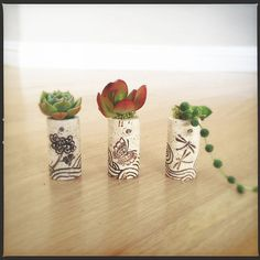 DIY Succulent Mini Garden Wine Corks, Zen, Chrysanthemum, Dragon Fly, Butterfly, Succulent Plants, Decorated Corks