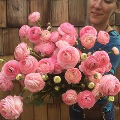 The #ranunculus are off the hook right now! Our best crop to date. Watch out Japan, we're coming for you  #farmerflorist #flowerfarmer