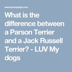 What is the difference between a Parson Terrier and a Jack Russell Terrier? - LUV My dogs