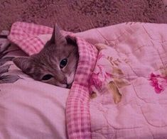 1000+ images about 💒 putrid in pink on We Heart It | See more about pink, archive and aesthetic Pink Marshmallows, We Heart It, Cats, Archive, Animals, Black, Gatos, Animales, Animaux