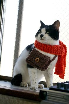 Adorable! Kitty is ready for a day on the town