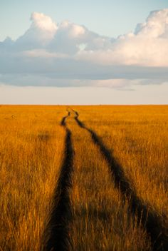 Tracks to infinity across the savanna in Kundelungu National Park in the Democratic Republic of Congo.