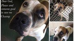Petition · Barack Obama: Tightly regulated dog breeding · Change.org
