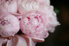 I can't get over peonies
