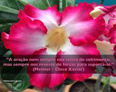 """""""A oração nem sempre nos retira do sofrimento, mas sempre nos reveste de forças para suportá-lo."""" (Meimei / Chico Xavier)"""