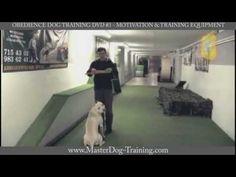 Obedience Dog Training DVD #3 - Motivation & Training Equipment