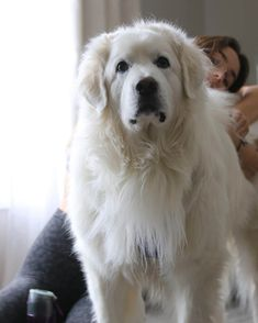 レイン・マッケンジーさんのインスタグラム写真 - (レイン・マッケンジーInstagram)「Swipe to see one of the great loves of my life . . . #purelove #mydog #model #yoga #yogawear #exercise #instadaily」1月17日 9時02分 - makenzie_raine Images O, Leggings Fashion, Dogs, Animals, Animales, Animaux, Pet Dogs, Doggies, Animal