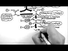 Handwritten Tutorials | Cellular Respiration 2 - Glycolysis - YouTube.  Emphasis on enzymes and molecular.