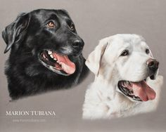 By Marion Tubiana Animal Action, Color Pencil Art, Black Labrador, Dog Portraits, Pastel, Animal Paintings, Dog Art, Great Artists, Pet Birds