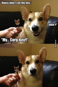 funny dog jokes - Google keresés